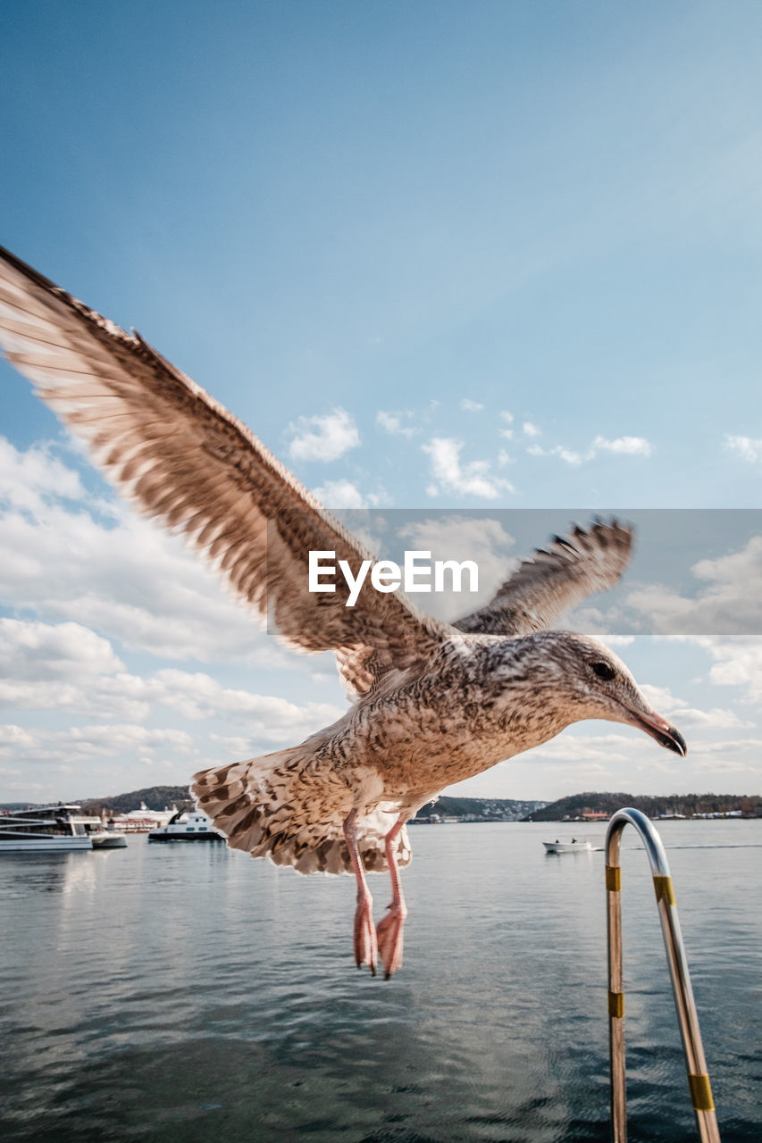 water, sky, animal themes, animal, vertebrate, animals in the wild, animal wildlife, bird, one animal, nature, spread wings, cloud - sky, flying, day, no people, sea, waterfront, beauty in nature, outdoors, seagull