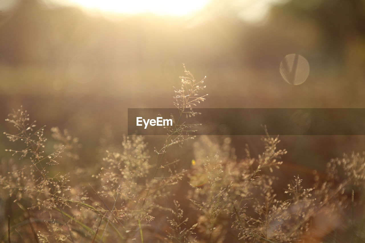 plant, nature, tranquility, selective focus, growth, no people, beauty in nature, day, close-up, field, land, cold temperature, winter, sunlight, focus on foreground, outdoors, fragility, vulnerability, frozen, lens flare