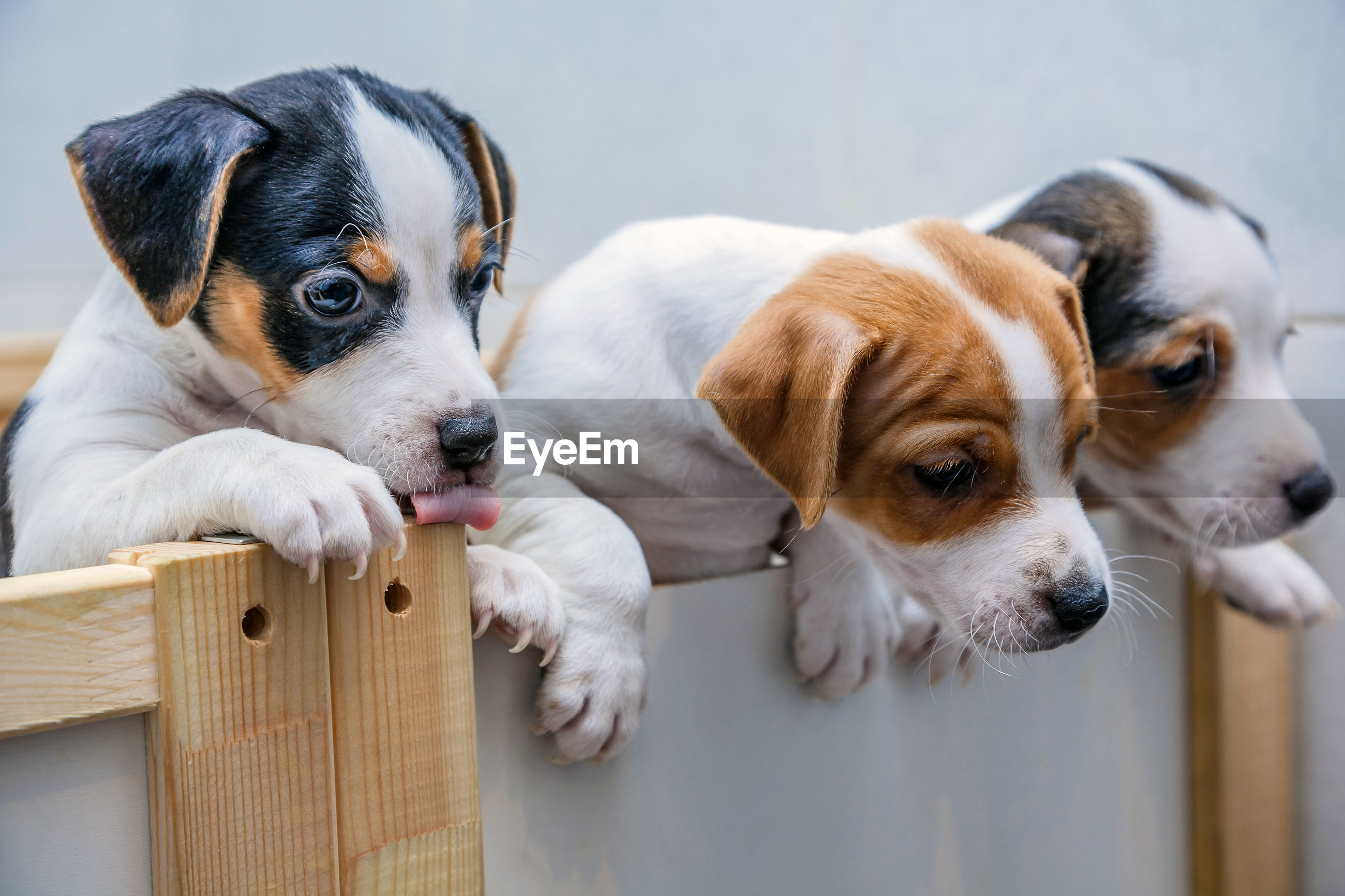 Close-up of puppies in crate at home