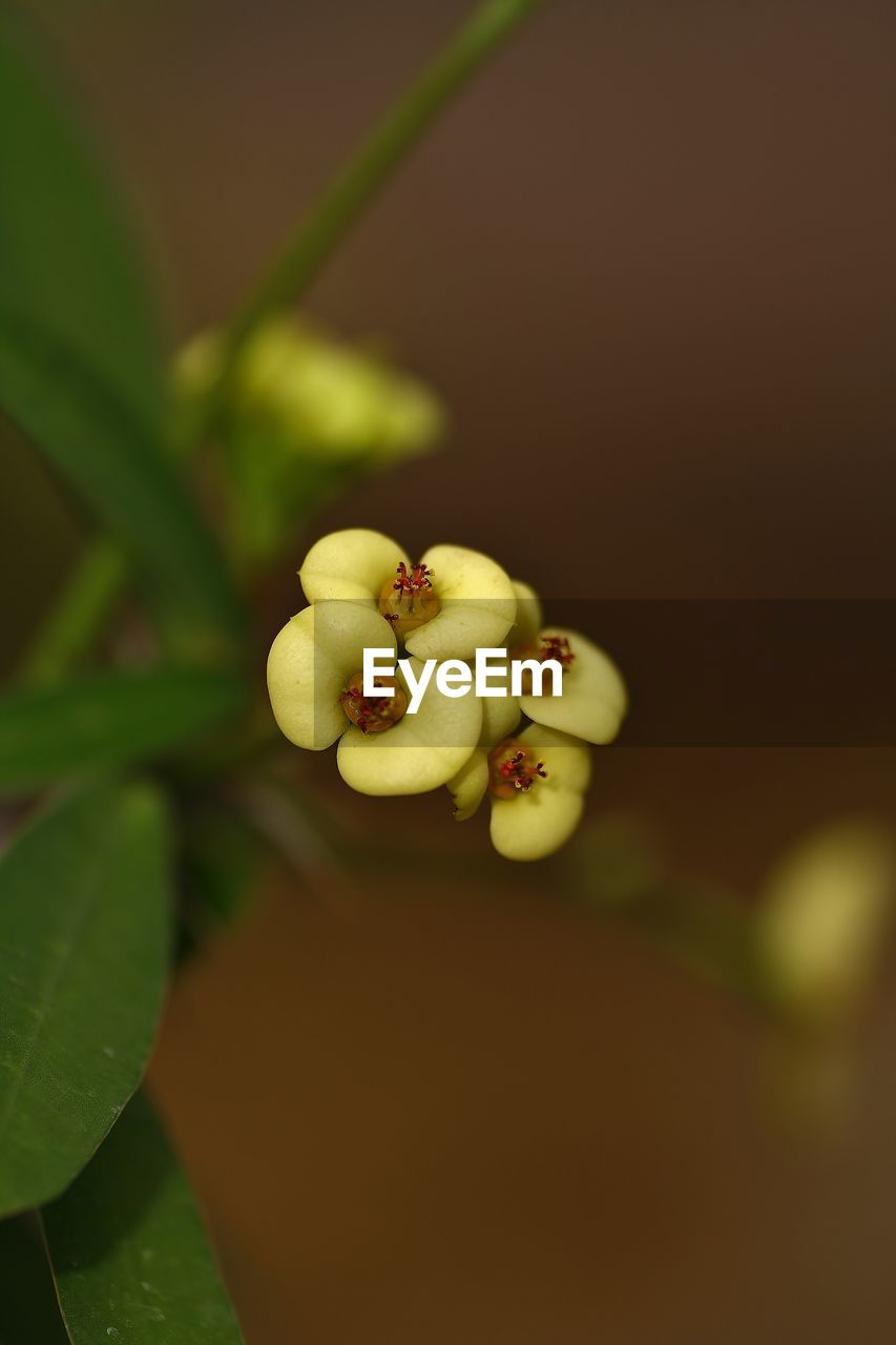growth, fruit, freshness, nature, beauty in nature, food and drink, close-up, no people, plant, fragility, leaf, food, healthy eating, day, flower, outdoors, flower head