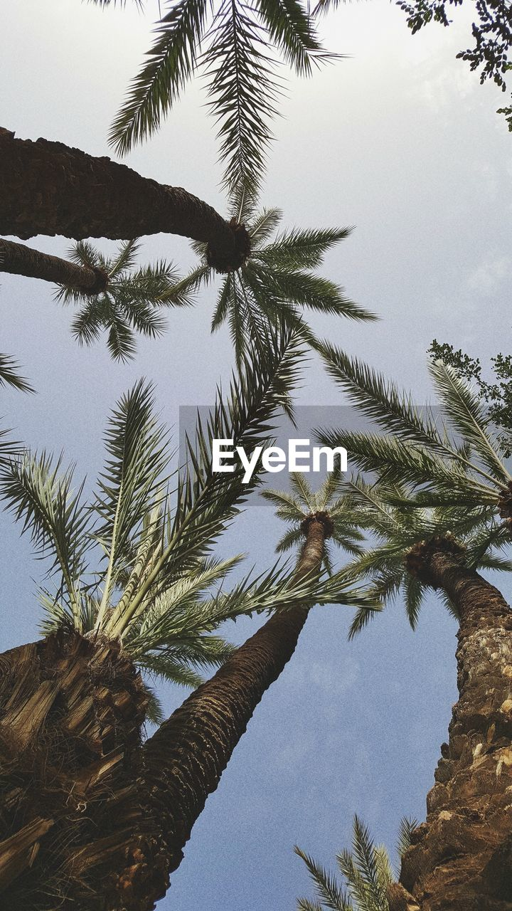 tree, low angle view, palm tree, nature, growth, sky, day, tree trunk, no people, beauty in nature, outdoors