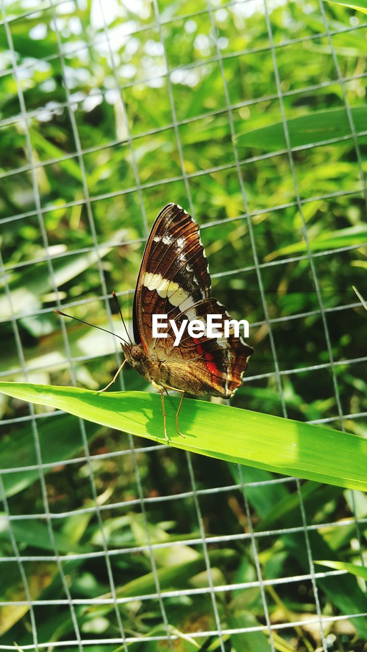 animal themes, one animal, animal, animals in the wild, invertebrate, insect, animal wildlife, focus on foreground, green color, nature, close-up, plant, day, no people, beauty in nature, plant part, animal wing, leaf, outdoors, selective focus, butterfly - insect, butterfly