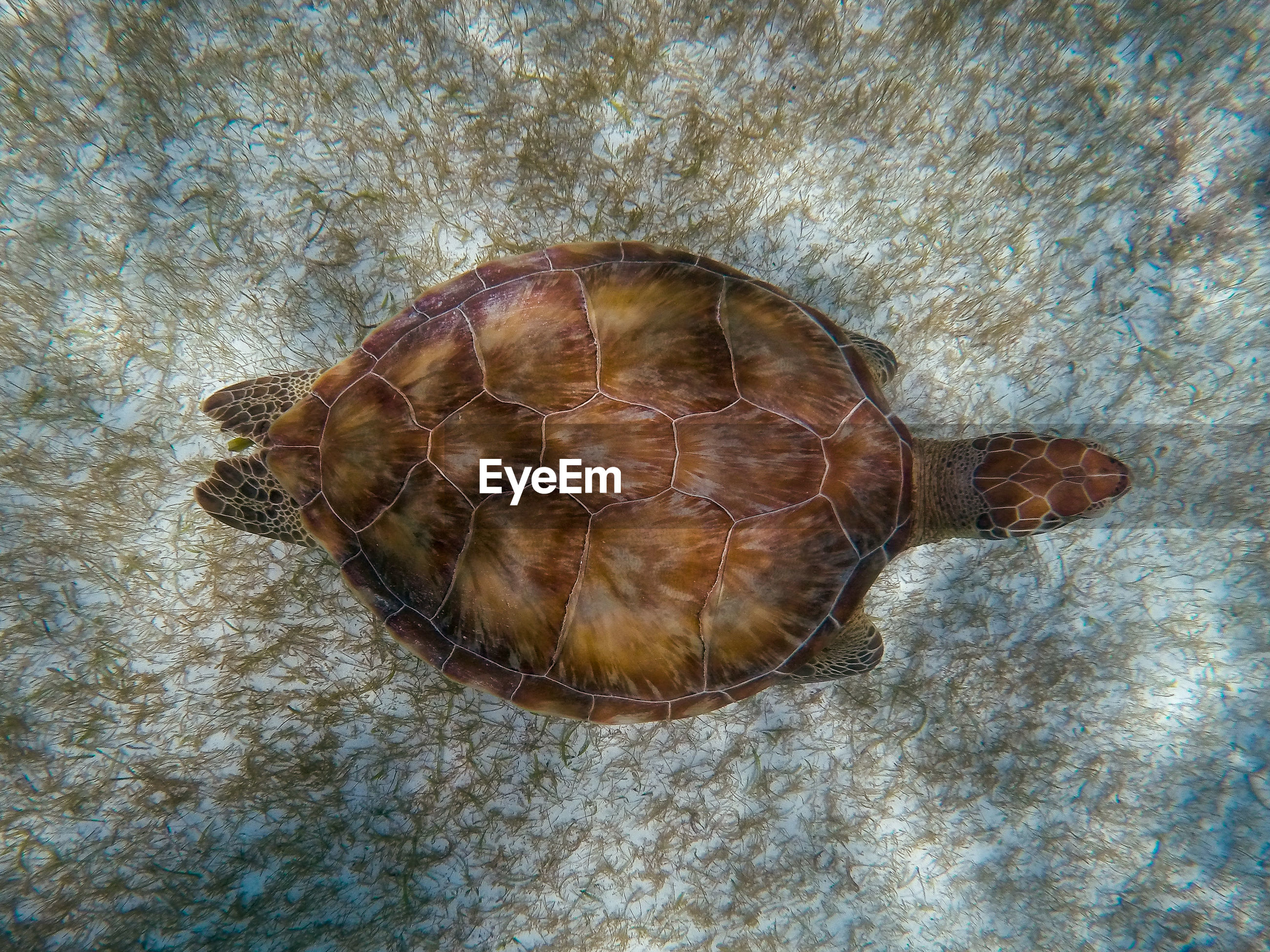 High angle view of a turtle on ground