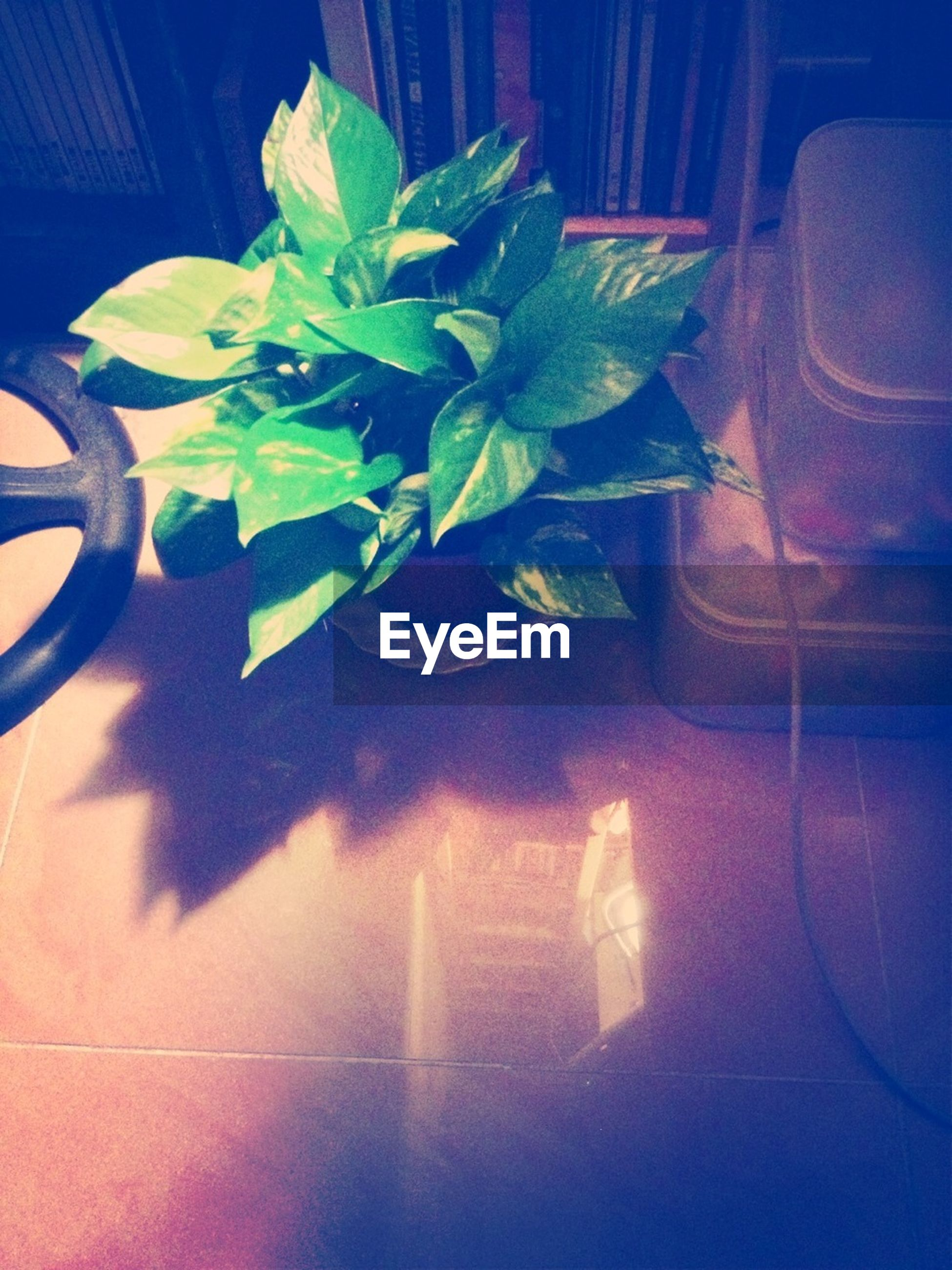 indoors, blue, plant, glass - material, growth, window, close-up, green color, leaf, sunlight, no people, transparent, reflection, nature, day, potted plant, shadow, water, high angle view