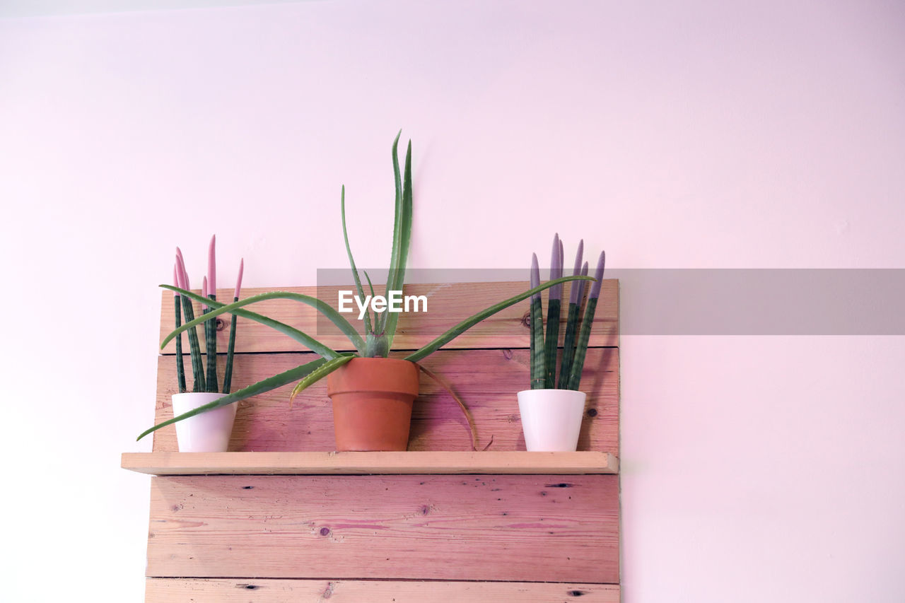 potted plant, plant, indoors, no people, pink color, studio shot, nature, growth, copy space, close-up, green color, still life, wood - material, succulent plant, plant part, cactus, decoration, leaf, wall - building feature, houseplant, flower pot