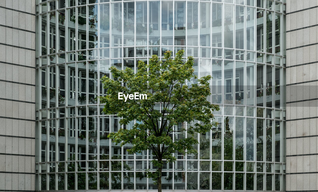 Tree against modern building
