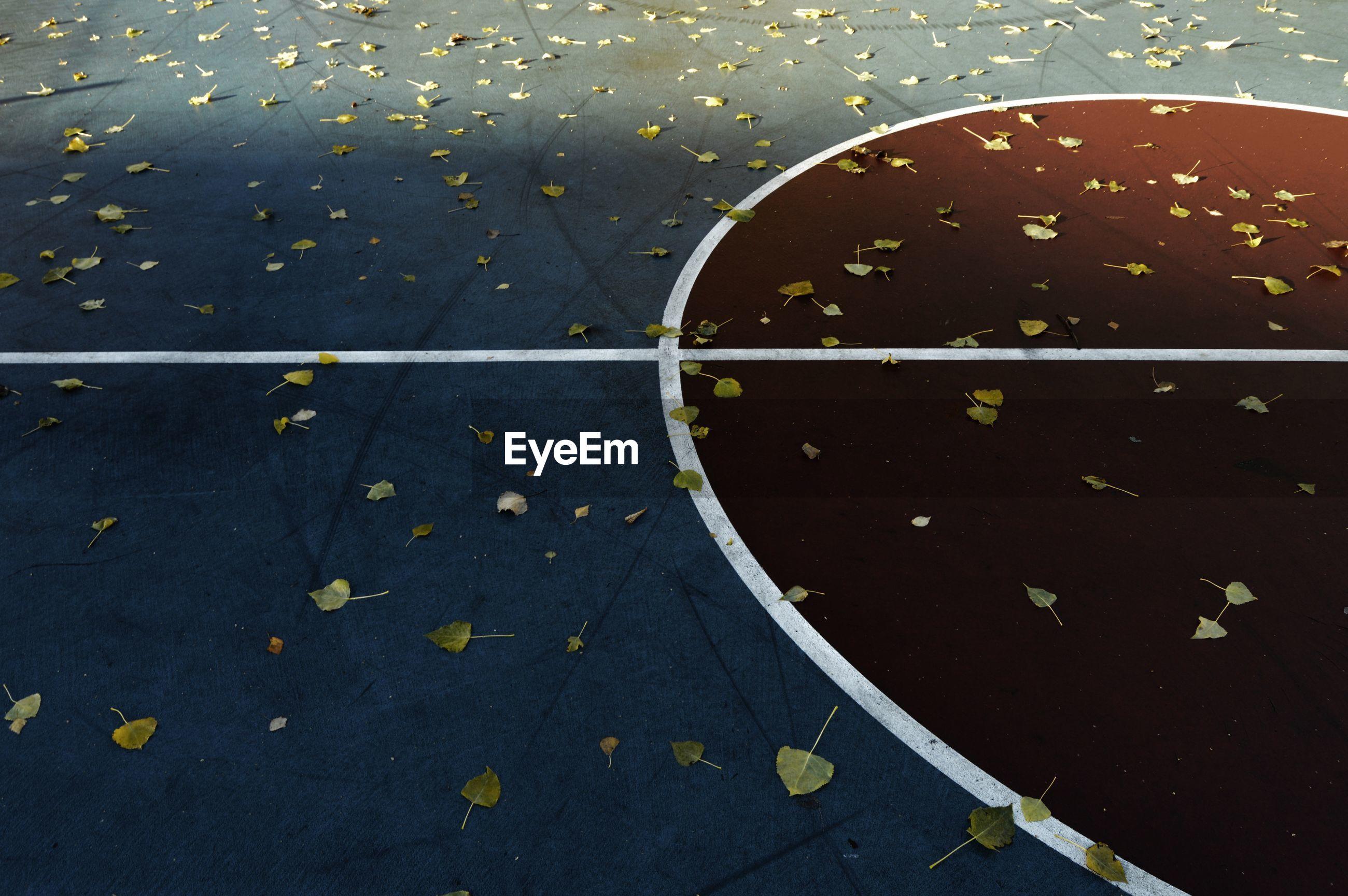 High angle view of yellow leaf on basketball court