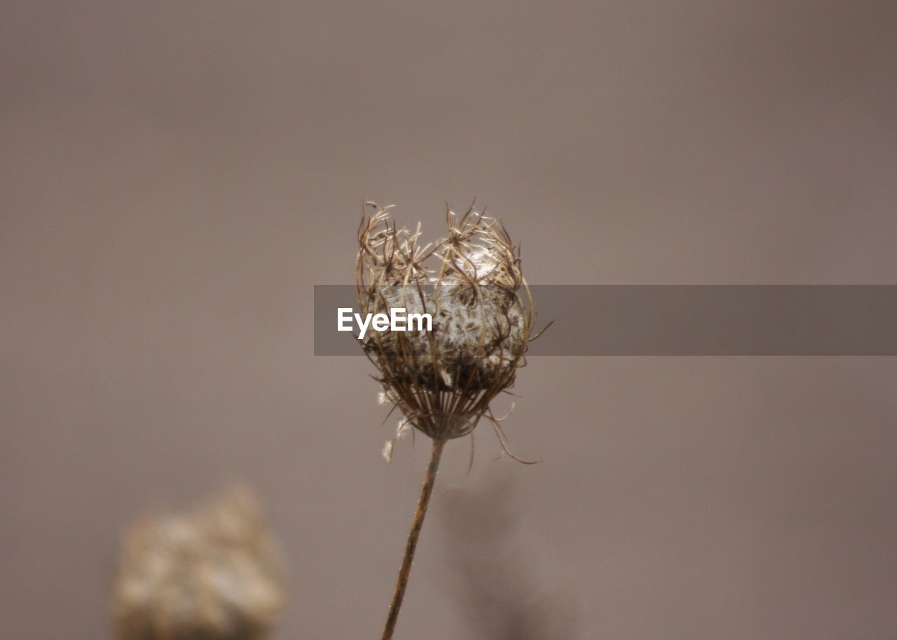 nature, fragility, close-up, plant, growth, no people, flower, day, outdoors, freshness, beauty in nature, flower head