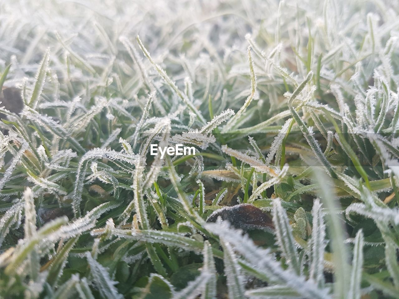 field, cold temperature, nature, winter, full frame, no people, close-up, backgrounds, day, snow, beauty in nature, plant, tranquility, frozen, outdoors, growth