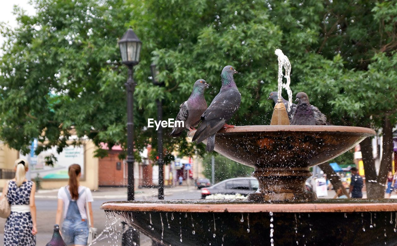water, fountain, day, nature, focus on foreground, tree, incidental people, sculpture, statue, plant, motion, representation, splashing, art and craft, architecture, park - man made space, bird, outdoors, park, spraying