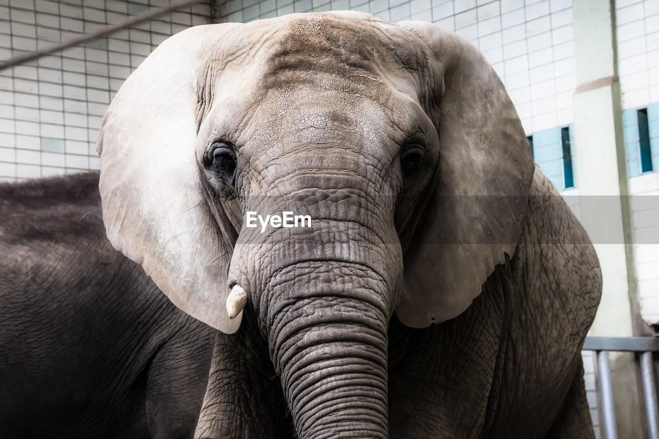 Portrait Of Elephant At Zoo