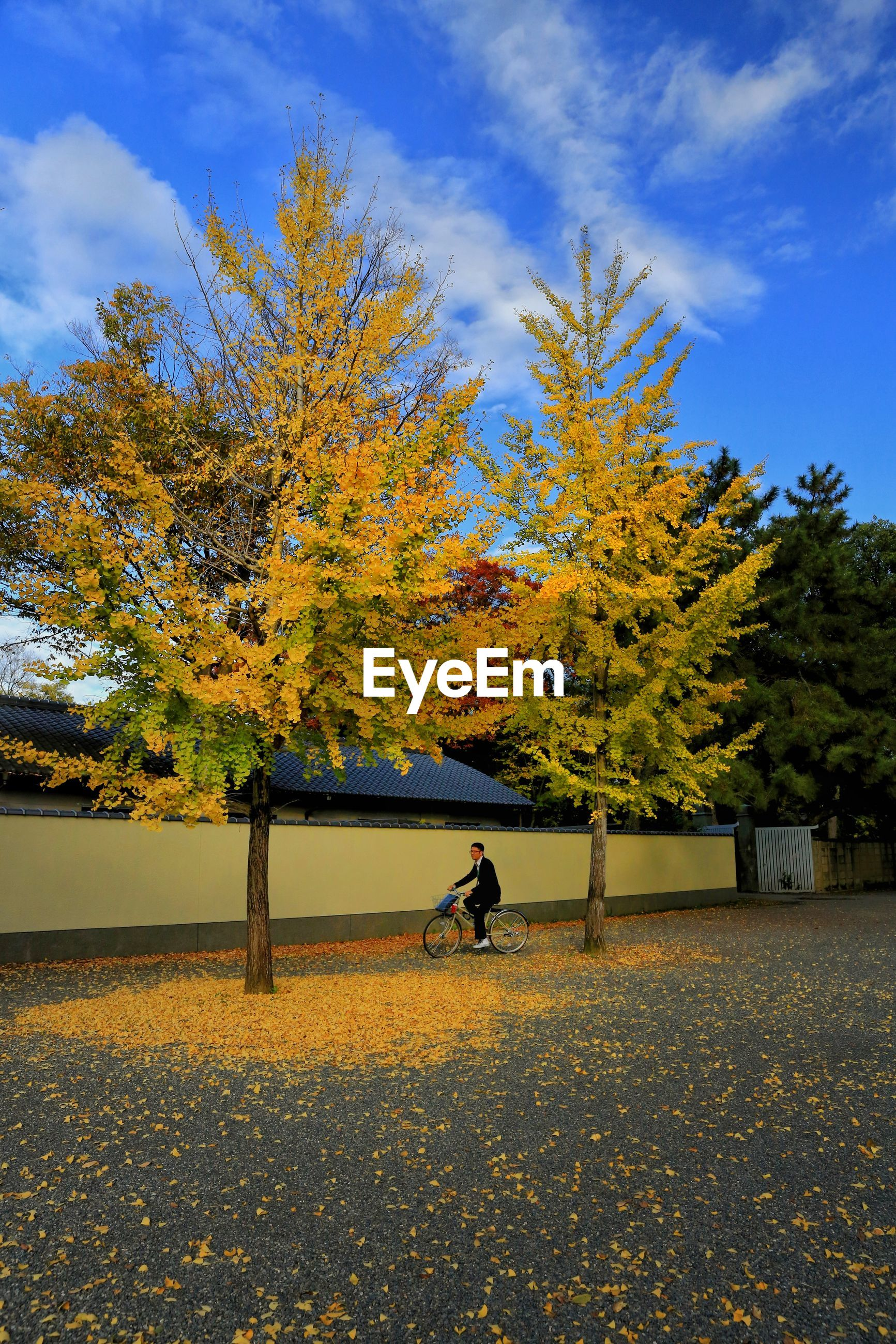 Man riding bicycle by trees during autumn