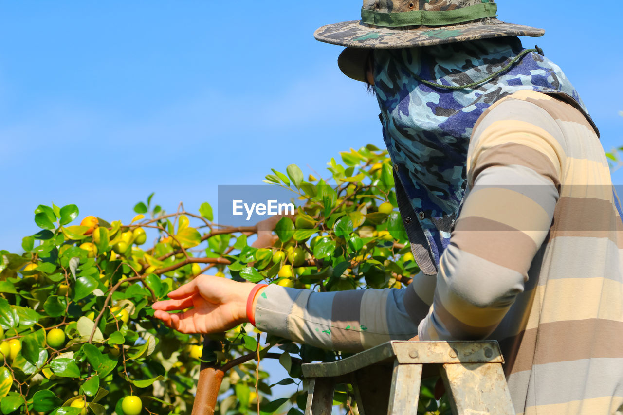 Person Harvesting Fruits