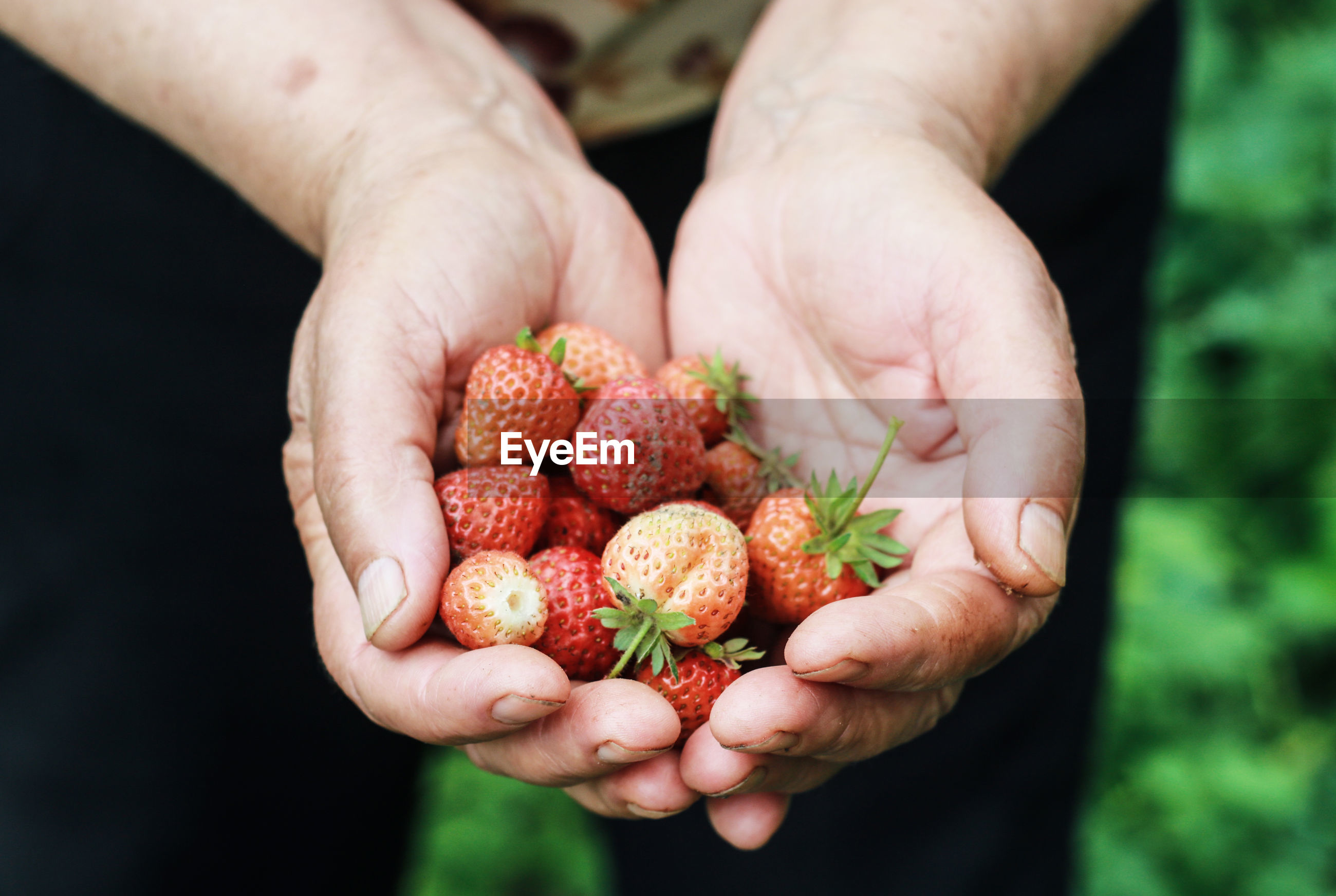 Midsection of man holding strawberries