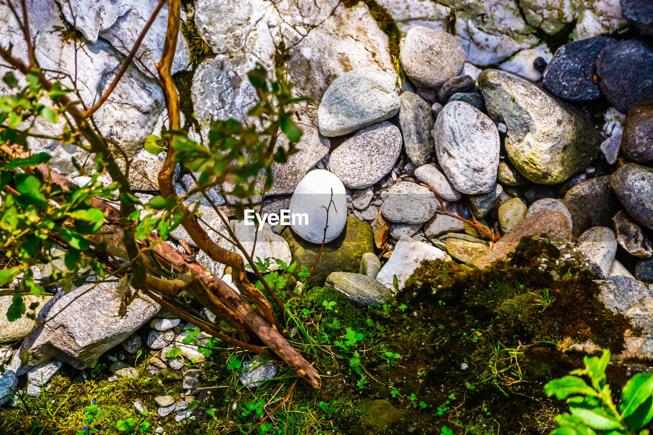 rock, solid, rock - object, tree, nature, no people, plant, day, stone, land, textured, beauty in nature, stone - object, water, outdoors, focus on foreground, close-up, tranquility, growth, animal wildlife, pebble