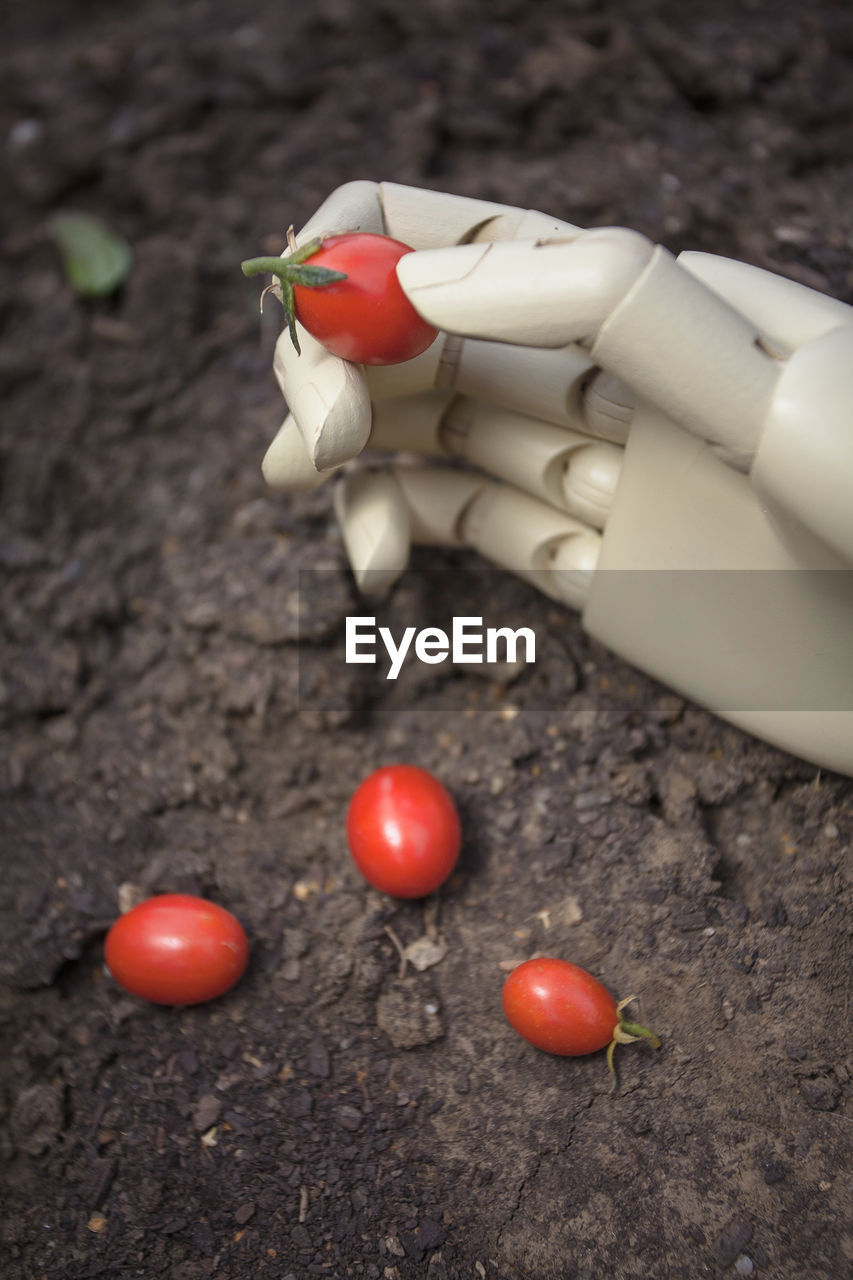 food, human hand, human body part, hand, food and drink, fruit, tomato, one person, red, vegetable, freshness, healthy eating, wellbeing, body part, day, finger, human finger, holding, close-up, outdoors, ripe