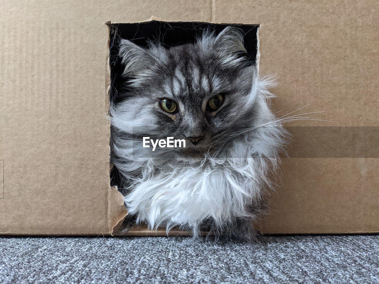PORTRAIT OF A CAT IN A BOX