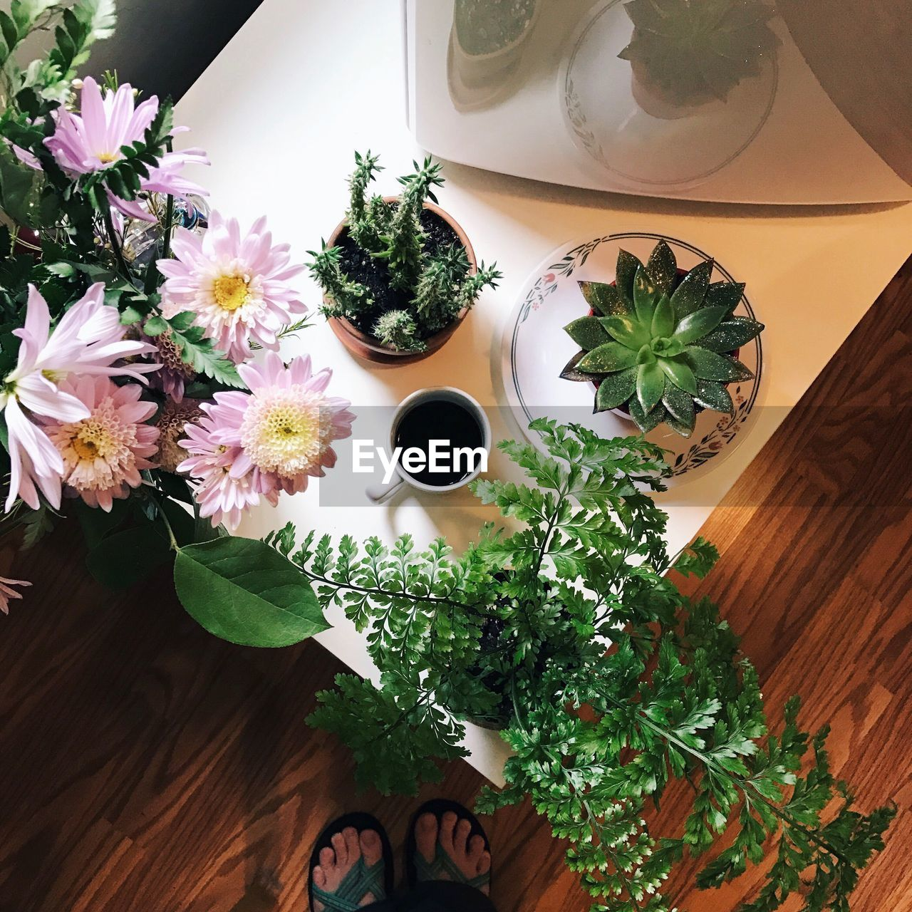 High Angle View Of Plants On Table