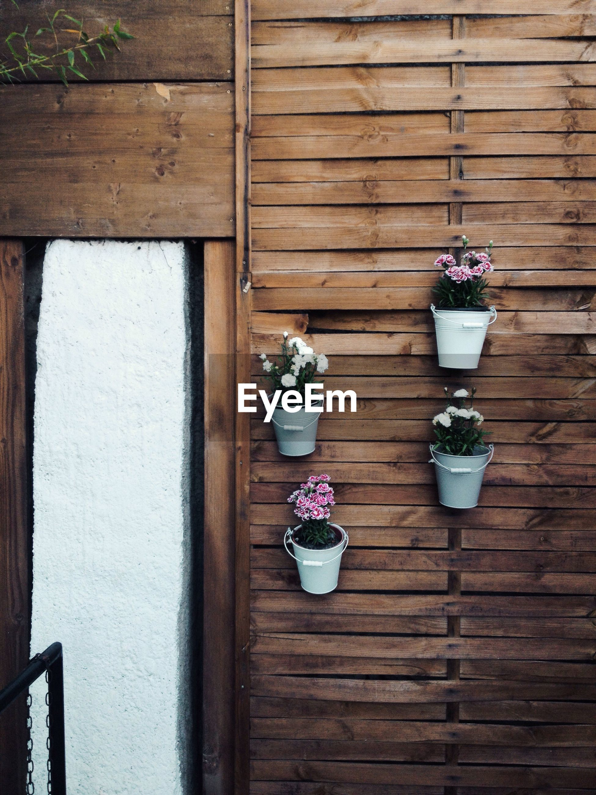 Flower pots mounted on wooden wall