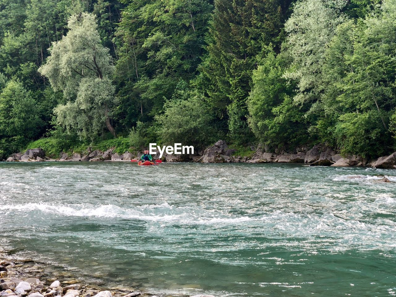 water, tree, plant, waterfront, sport, adventure, beauty in nature, nature, sea, aquatic sport, day, real people, land, scenics - nature, lifestyles, forest, leisure activity, people, outdoors, flowing water