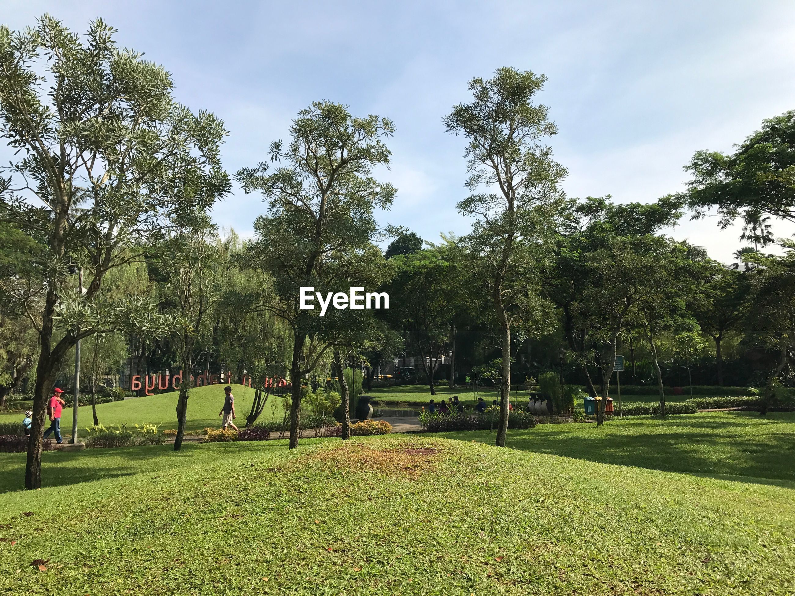 tree, growth, park - man made space, sky, green color, nature, grass, day, outdoors, park, no people, beauty in nature