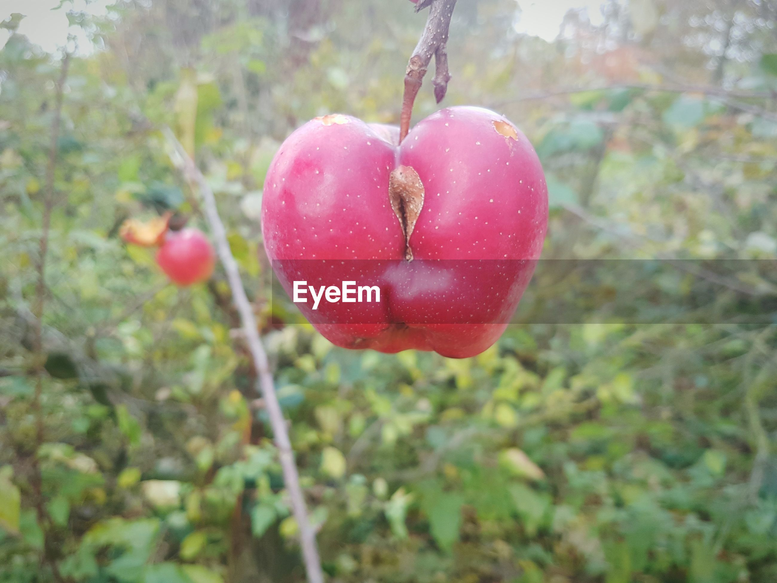 heart shape, growth, close-up, nature, outdoors, healthy eating, no people, day, freshness, beauty in nature, food, fragility