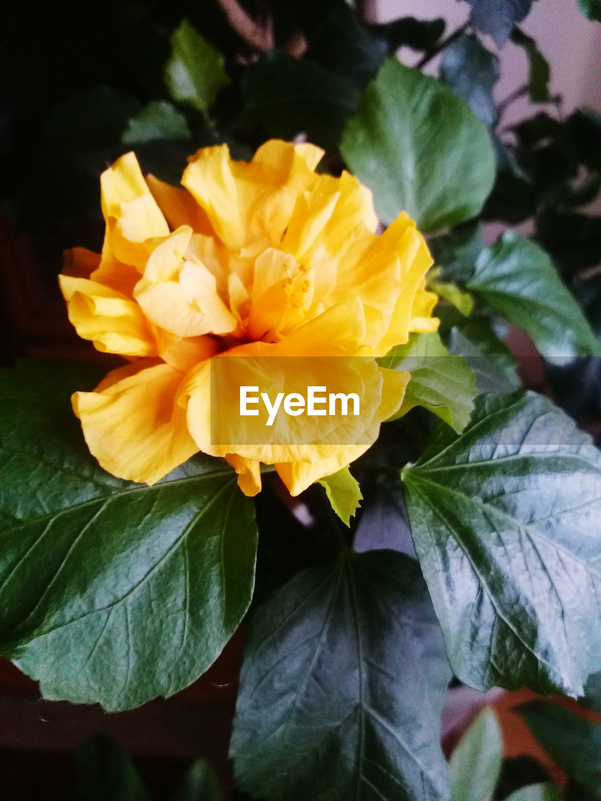 flower, petal, freshness, flower head, yellow, fragility, growth, beauty in nature, close-up, leaf, nature, plant, blooming, single flower, high angle view, in bloom, no people, blossom, orange color, pollen