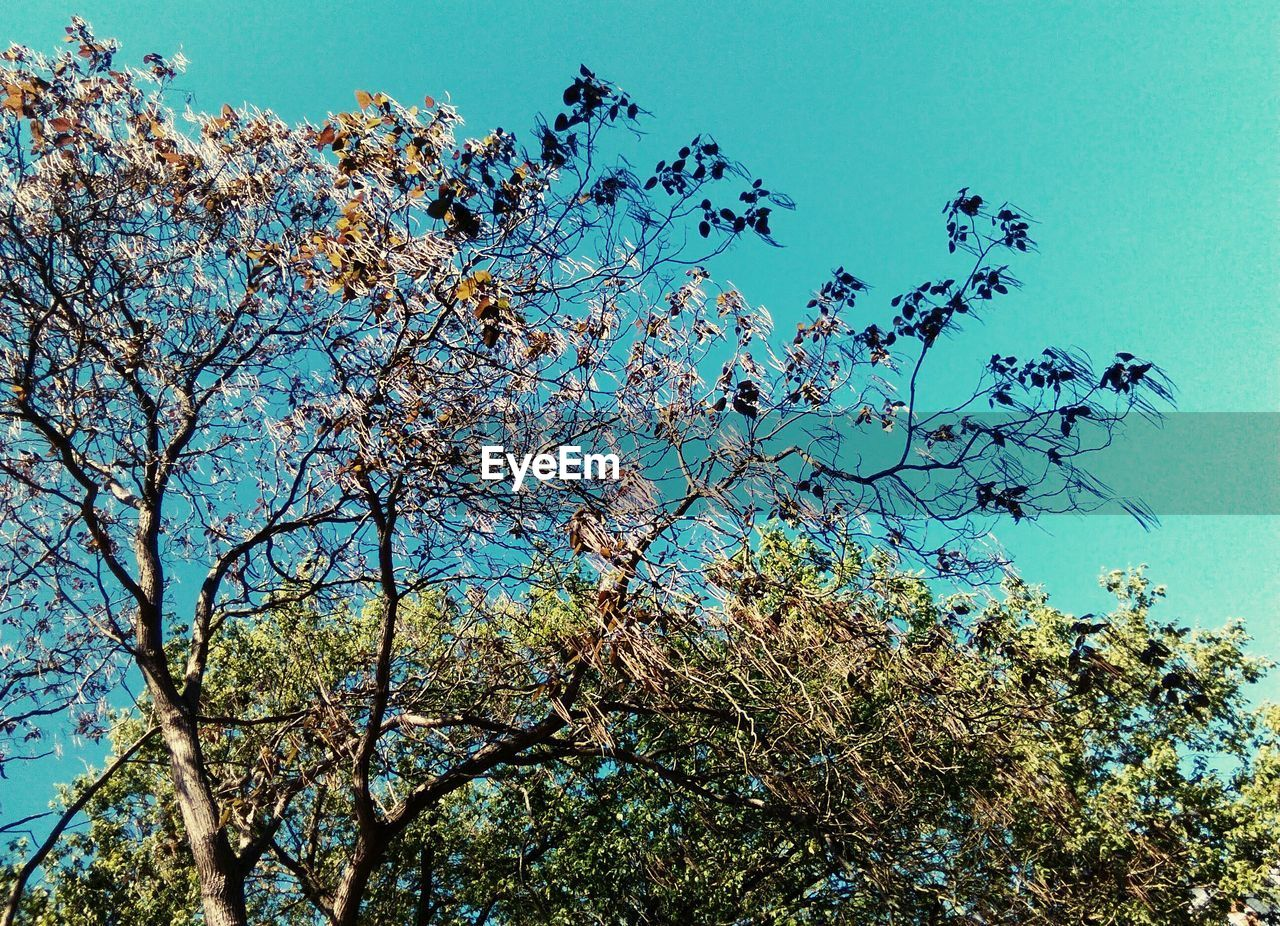 tree, low angle view, nature, growth, sky, clear sky, beauty in nature, branch, blue, no people, flower, day, outdoors, plant, freshness