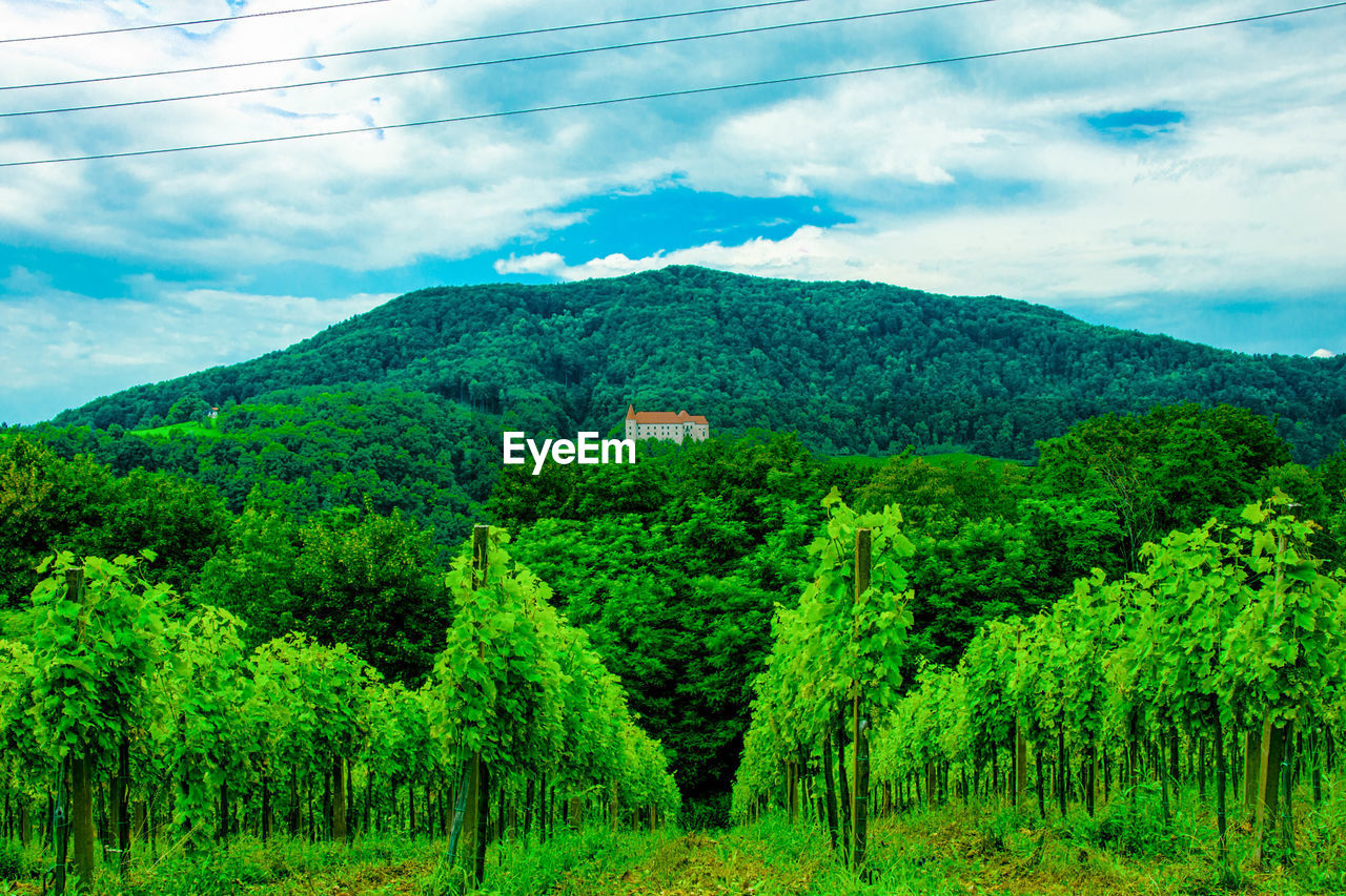 plant, green color, cloud - sky, tree, nature, beauty in nature, land, sky, scenics - nature, no people, mountain, landscape, growth, day, environment, tranquility, lush foliage, tranquil scene, foliage, non-urban scene, outdoors