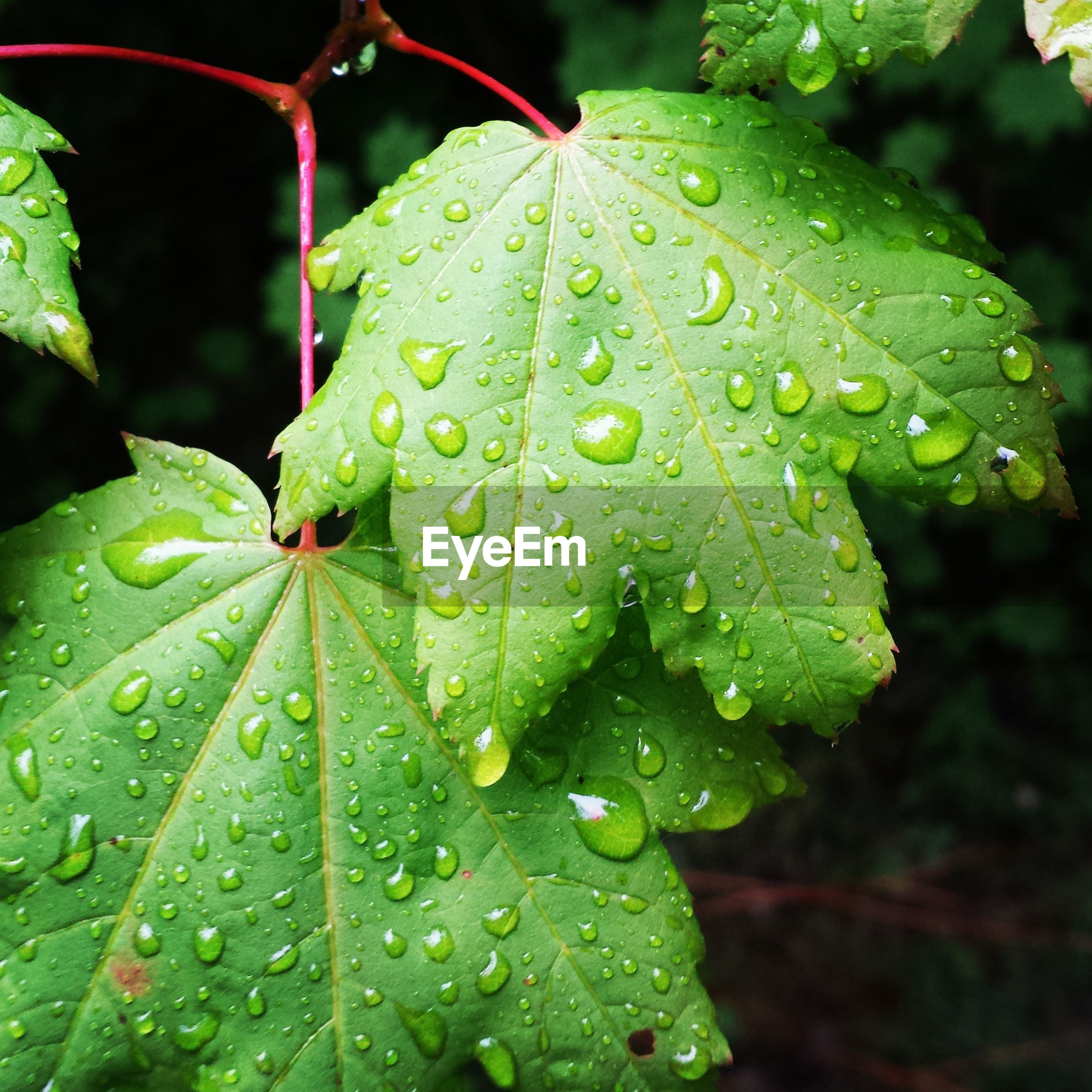 leaf, drop, water, wet, close-up, growth, green color, leaf vein, dew, freshness, focus on foreground, nature, raindrop, plant, beauty in nature, fragility, rain, season, selective focus, day