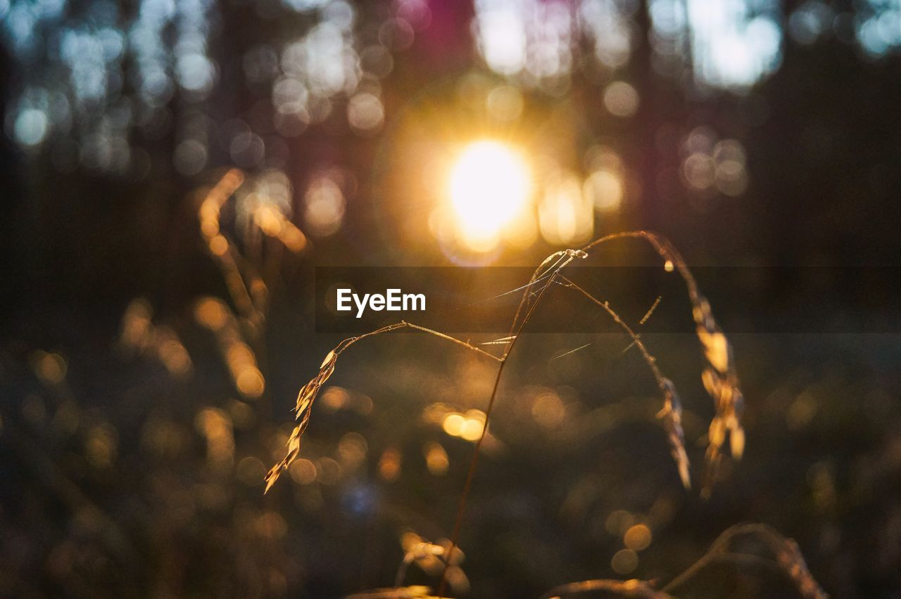 focus on foreground, plant, close-up, land, nature, no people, tree, sunlight, selective focus, tranquility, lens flare, growth, sunset, beauty in nature, fragility, day, outdoors, forest, field, vulnerability