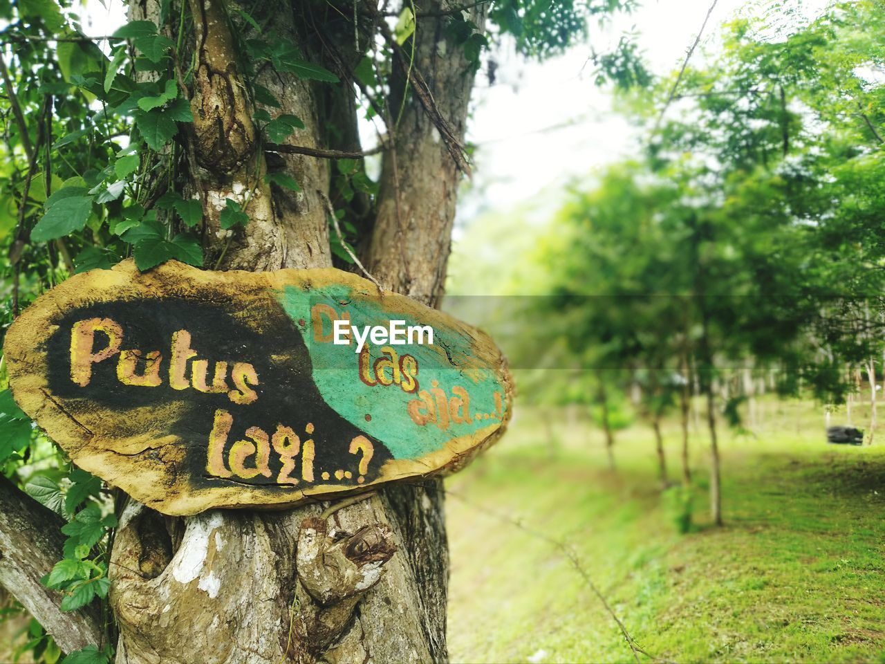 tree, text, western script, communication, plant, tree trunk, trunk, nature, information, no people, day, focus on foreground, information sign, sign, land, script, guidance, message, green color, park, outdoors