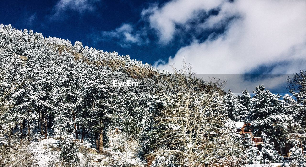 sky, snow, cloud - sky, cold temperature, winter, tree, beauty in nature, plant, low angle view, nature, no people, day, tranquility, white color, scenics - nature, frozen, tranquil scene, covering, outdoors, snowcapped mountain, coniferous tree