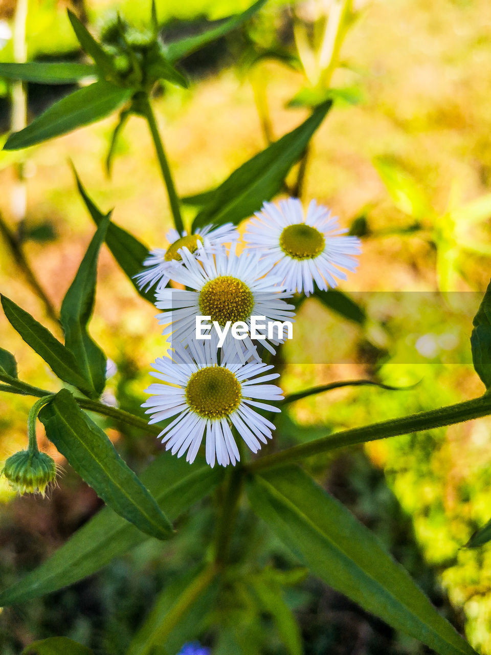 flower, flowering plant, plant, fragility, freshness, vulnerability, growth, beauty in nature, petal, close-up, inflorescence, flower head, nature, focus on foreground, no people, day, yellow, botany, pollen, selective focus, outdoors