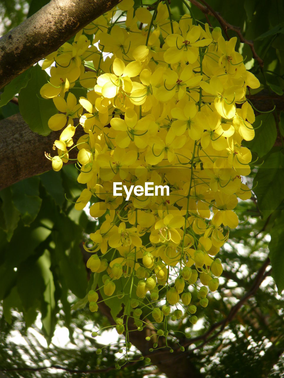 growth, flower, nature, yellow, beauty in nature, tree, freshness, day, outdoors, fragility, low angle view, branch, petal, plant, springtime, no people, close-up, flower head