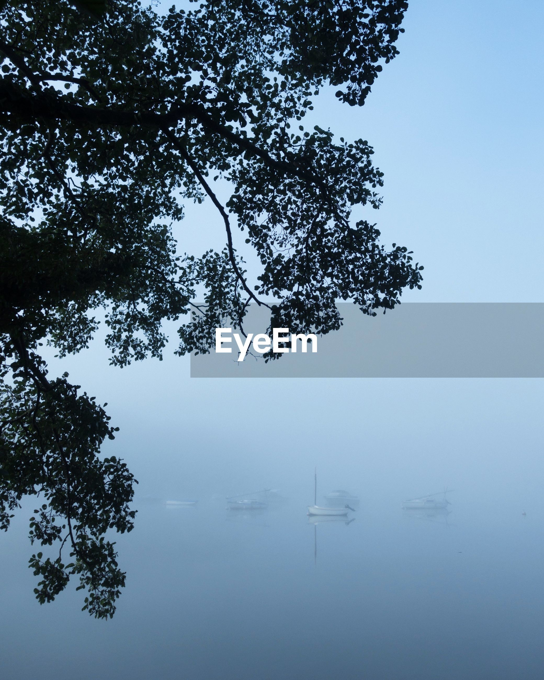 water, tree, tranquil scene, nature, beauty in nature, tranquility, lake, reflection, outdoors, fog, no people, scenics, nautical vessel, day, branch, sky