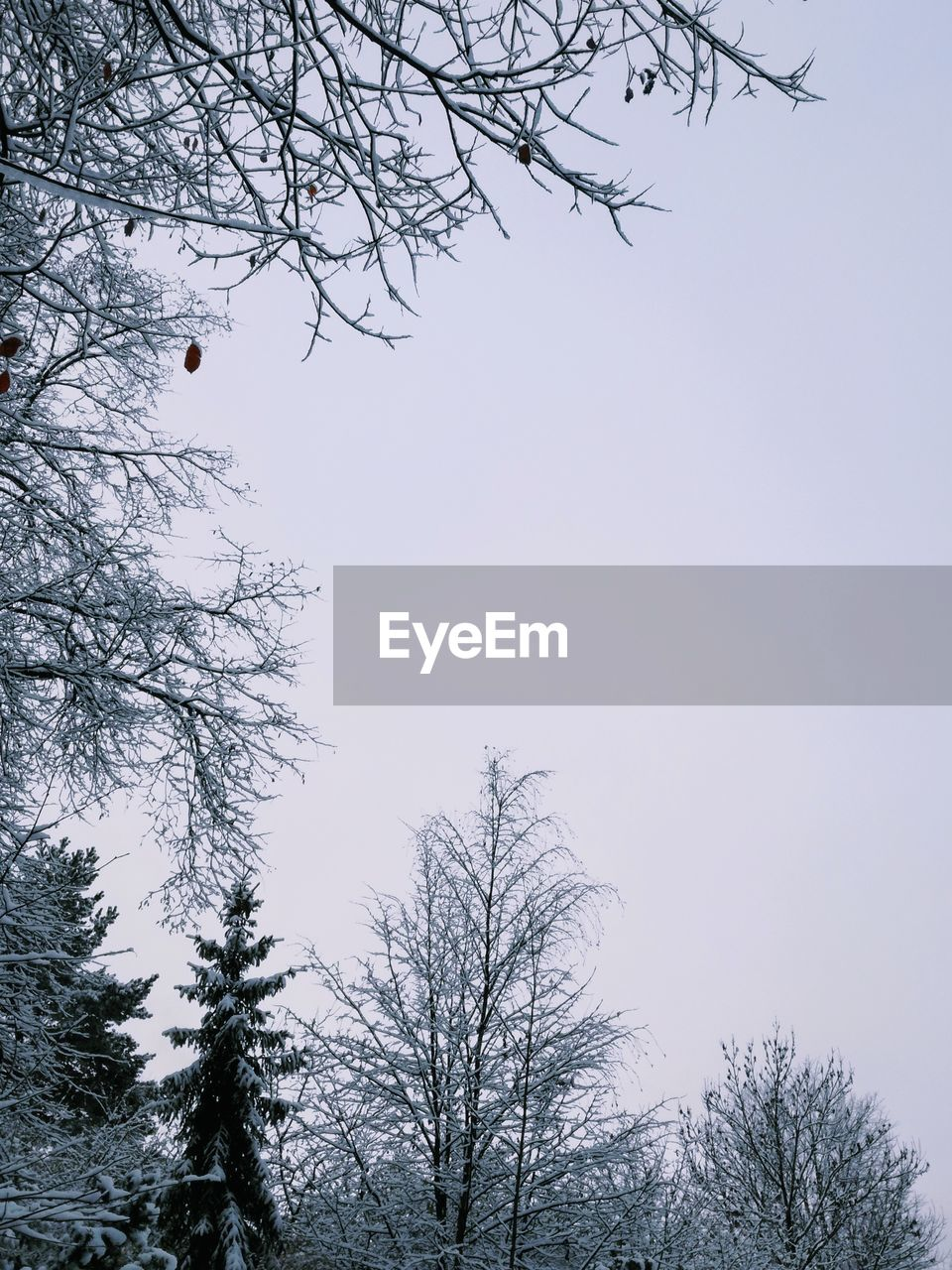 tree, bare tree, low angle view, branch, nature, beauty in nature, clear sky, no people, outdoors, day, tranquility, sky, cold temperature, winter, scenics, snow, freshness