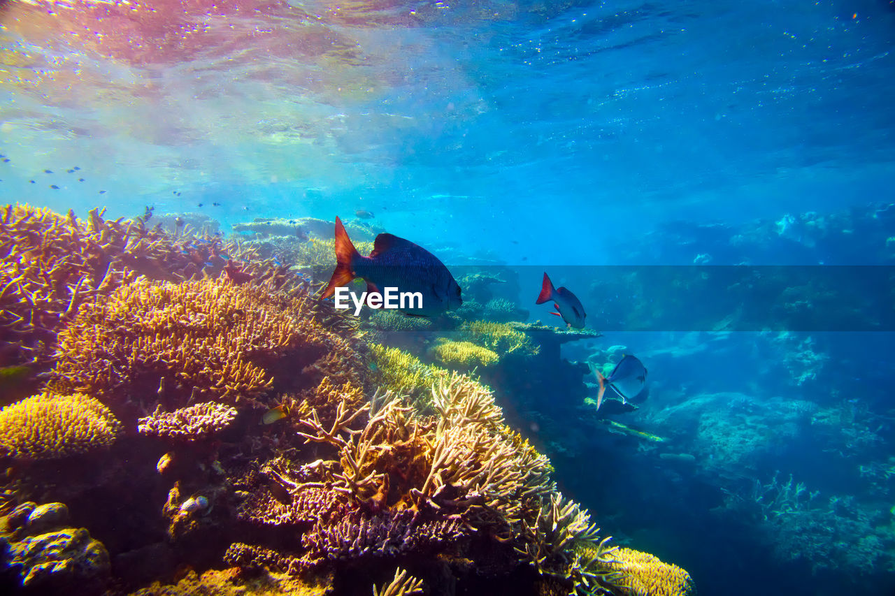 underwater, water, undersea, sea, swimming, animal wildlife, coral, animals in the wild, sea life, exploration, adventure, animal, invertebrate, blue, nature, scuba diving, aquatic sport, sport, animal themes, marine, underwater diving