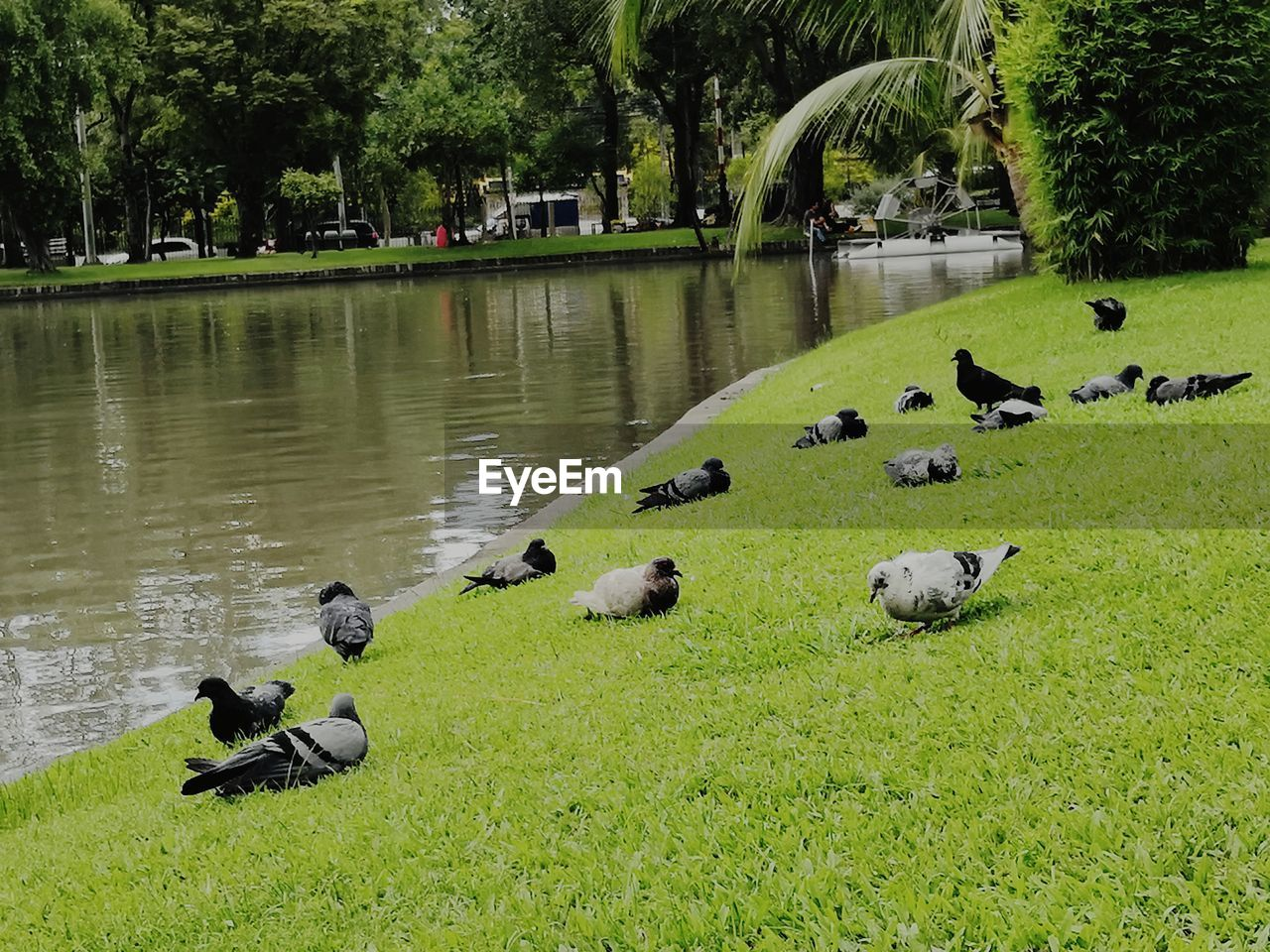 group of animals, plant, animal, bird, water, animal themes, tree, vertebrate, animals in the wild, animal wildlife, lake, large group of animals, nature, no people, day, park, grass, duck, outdoors, flock of birds
