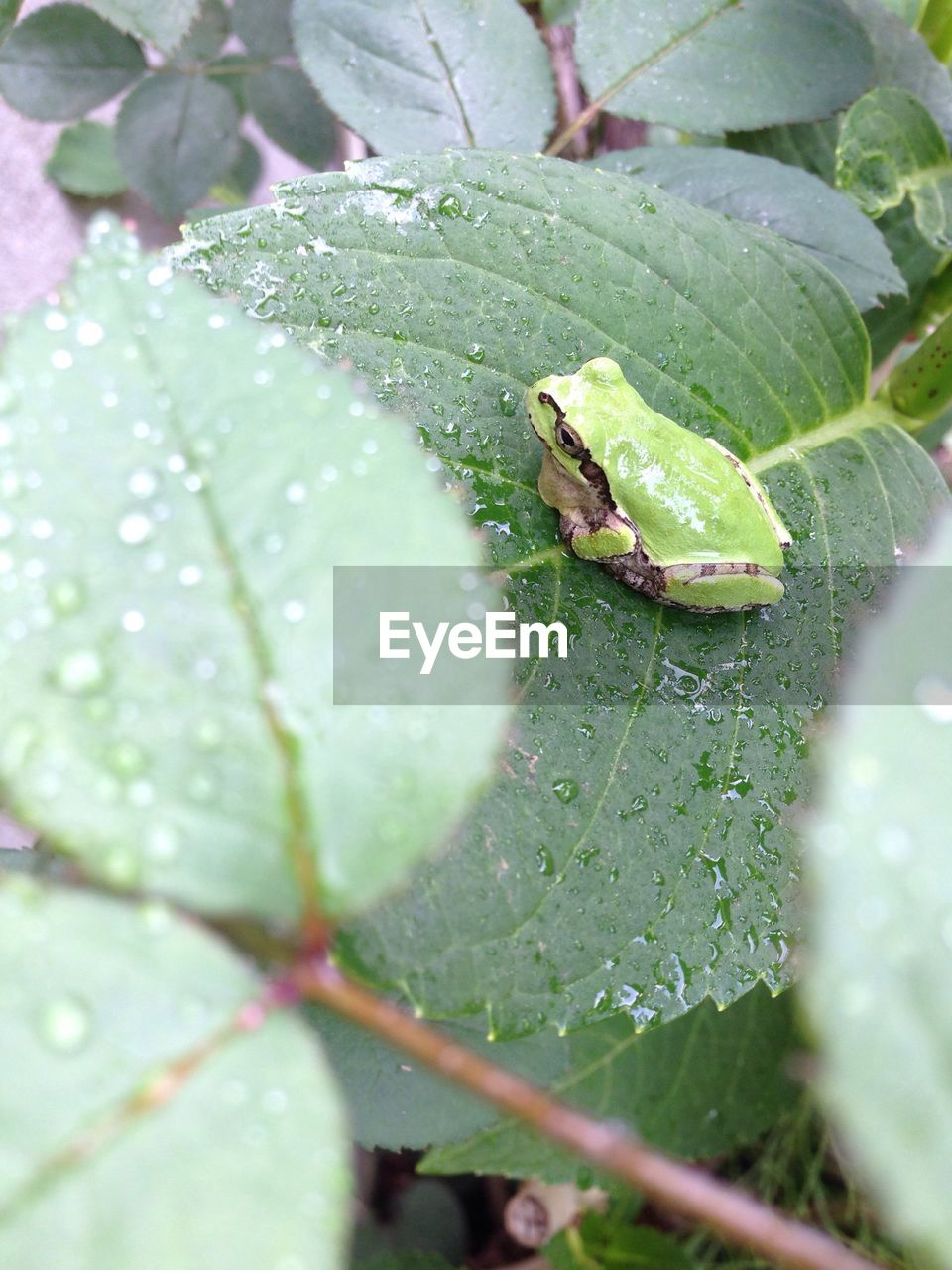 one animal, leaf, green color, animal themes, animals in the wild, insect, no people, day, nature, close-up, growth, outdoors, animal wildlife, plant