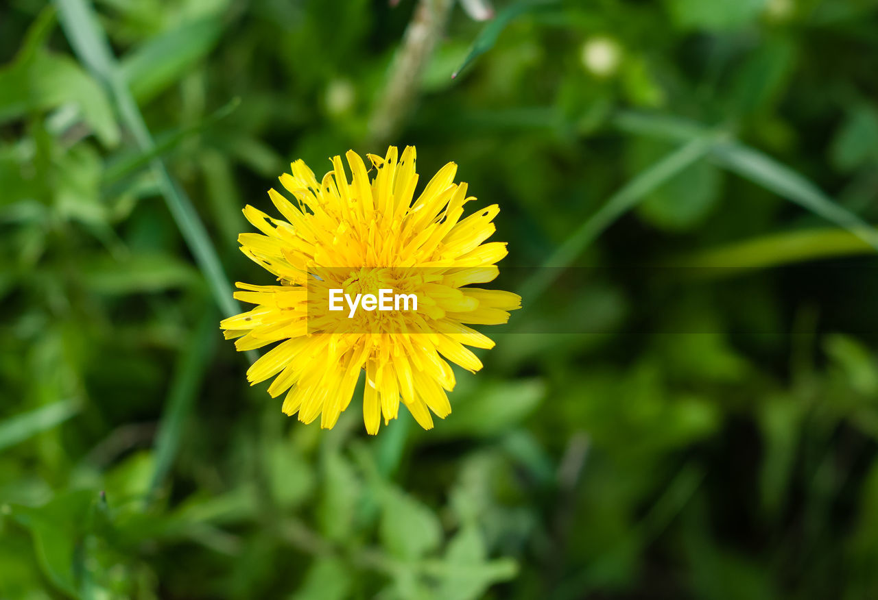 flower, yellow, beauty in nature, nature, fragility, growth, petal, freshness, flower head, plant, close-up, outdoors, no people, day, blooming