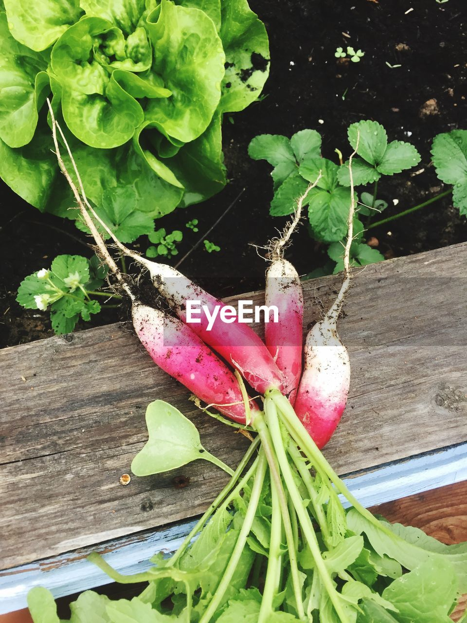 plant part, leaf, freshness, green color, plant, food and drink, growth, healthy eating, vegetable, wellbeing, close-up, no people, food, high angle view, nature, root vegetable, table, wood - material, day, outdoors, common beet