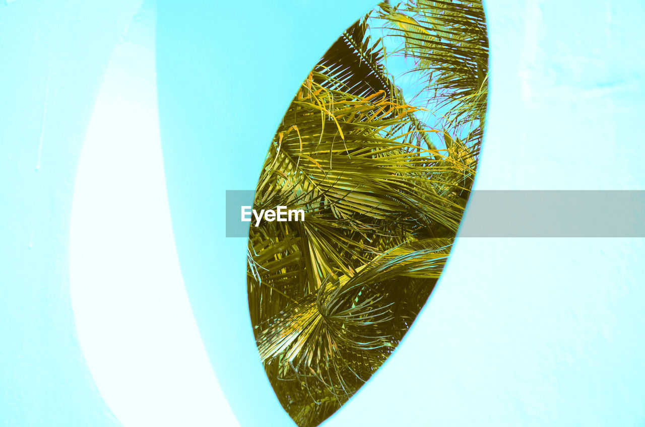 close-up, no people, indoors, studio shot, blue, nature, green color, day, still life, directly above, pattern, palm tree, leaf, white background, sky, plant, white color, high angle view, freshness