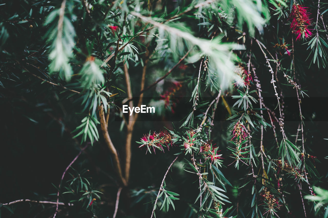 plant, growth, beauty in nature, green color, plant part, nature, close-up, leaf, no people, day, flowering plant, tranquility, tree, focus on foreground, freshness, flower, outdoors, vulnerability, fragility, branch, coniferous tree