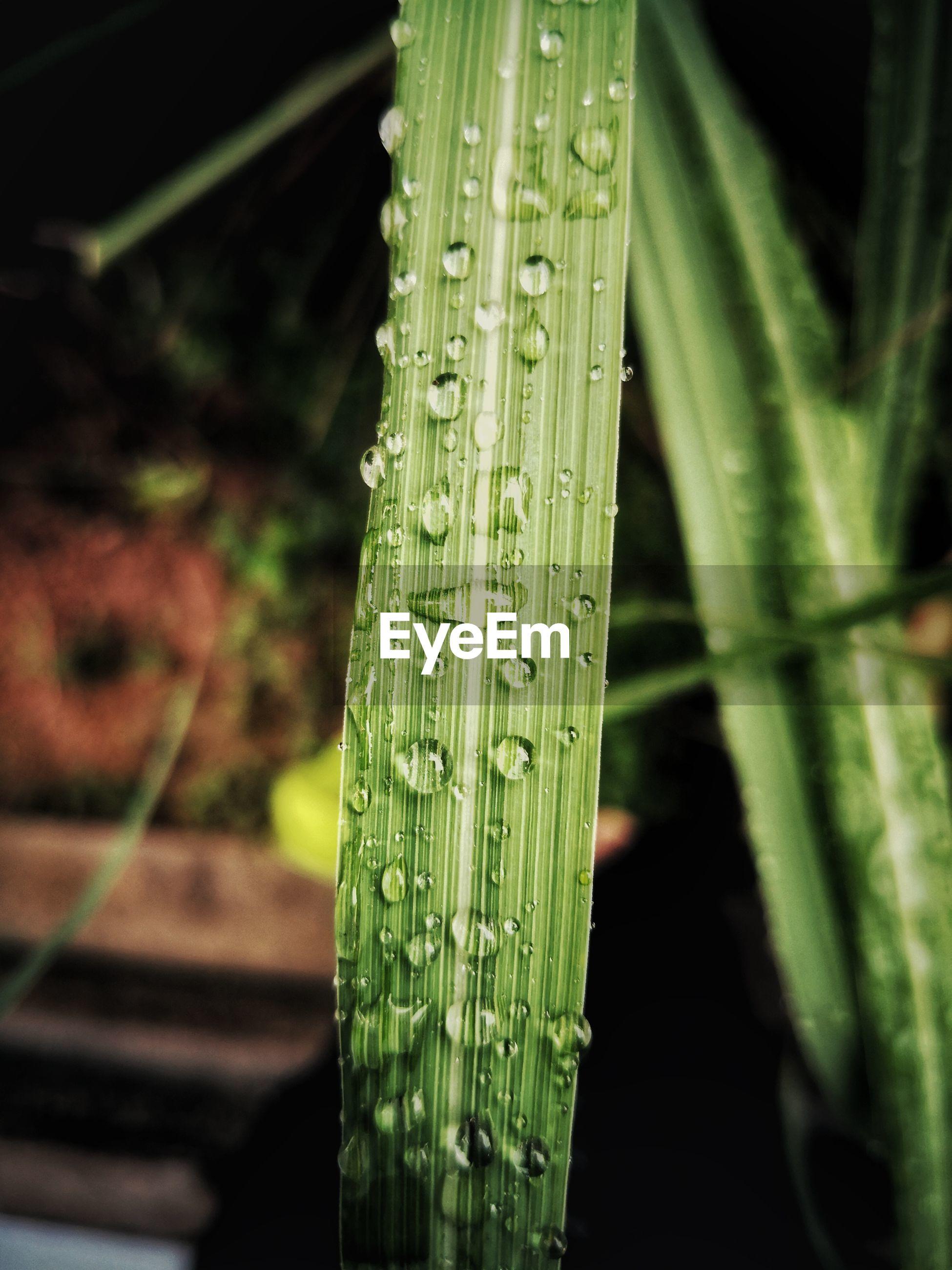 Close-up of fresh green leaf