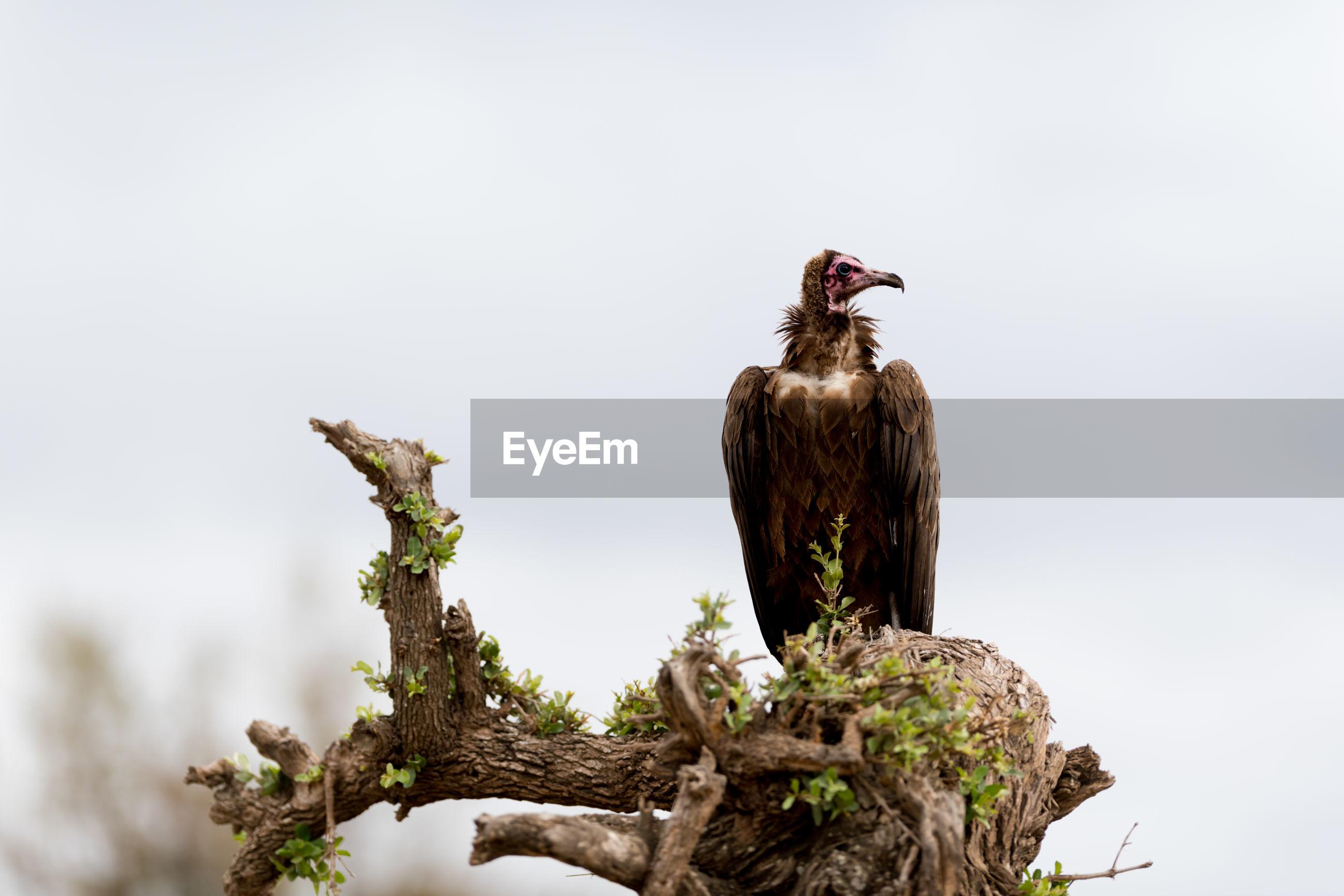 Bird perching on a tree stump