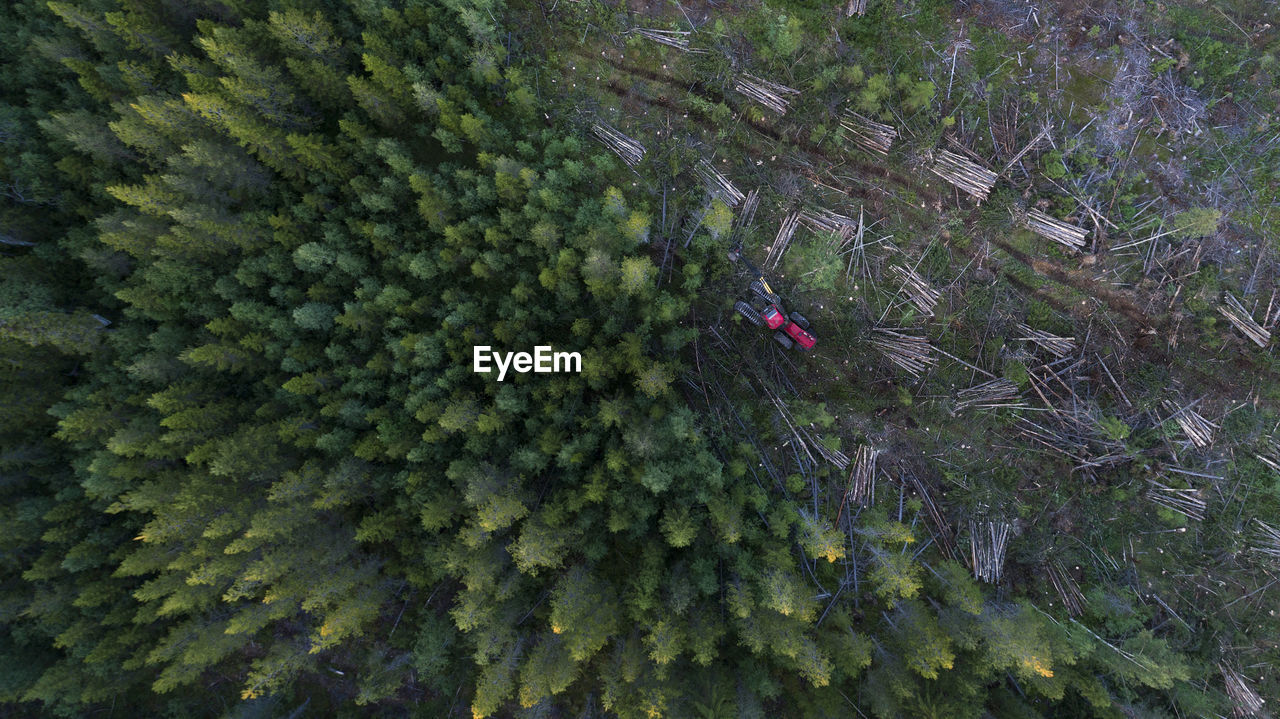 High Angle View Of Forestry Machinery Amidst Trees In Forest