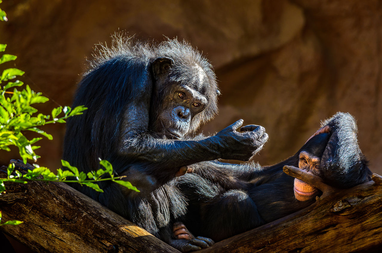 Monkey relaxing outdoors