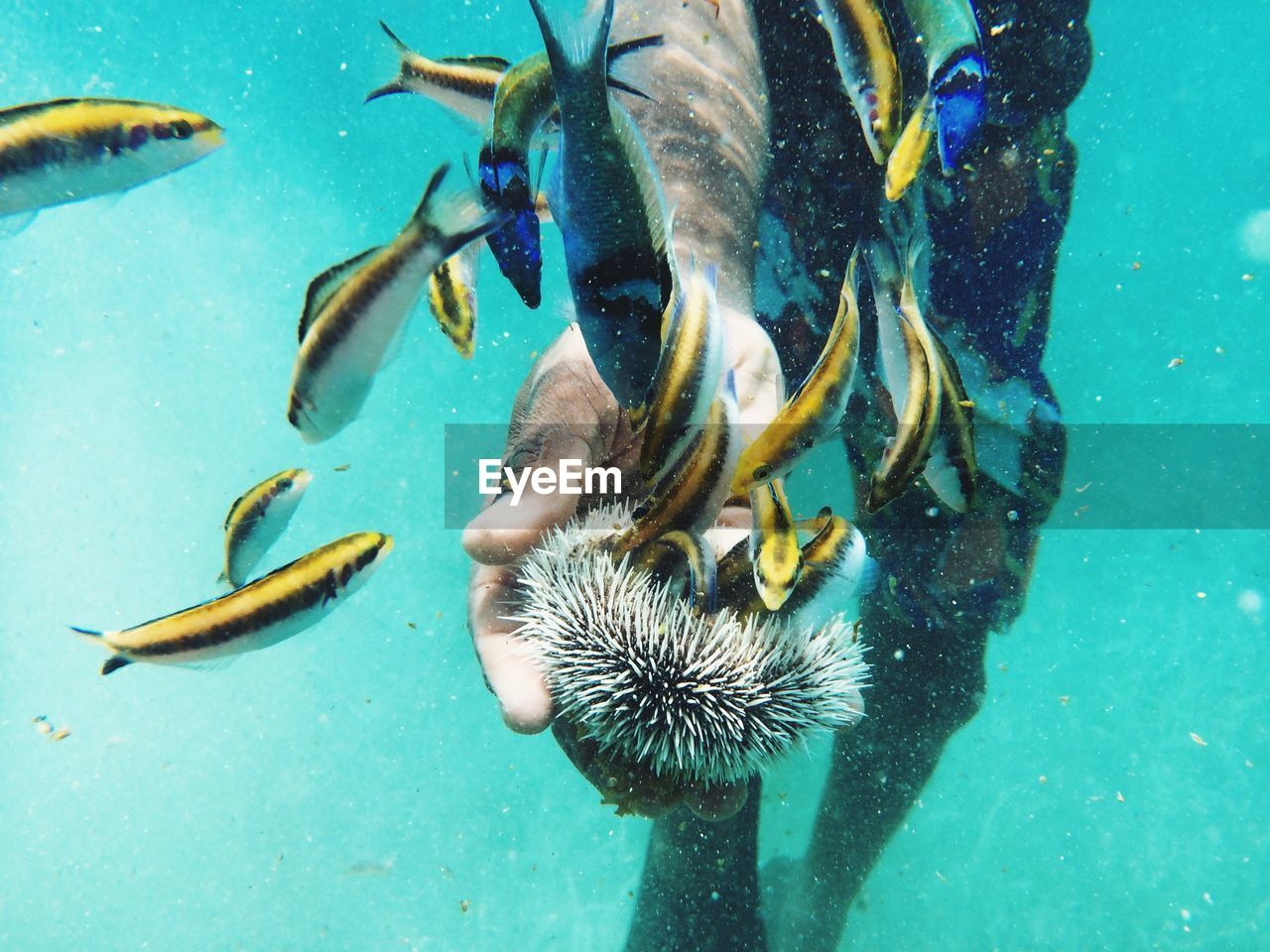 Midsection of man holding sea urchin in sea