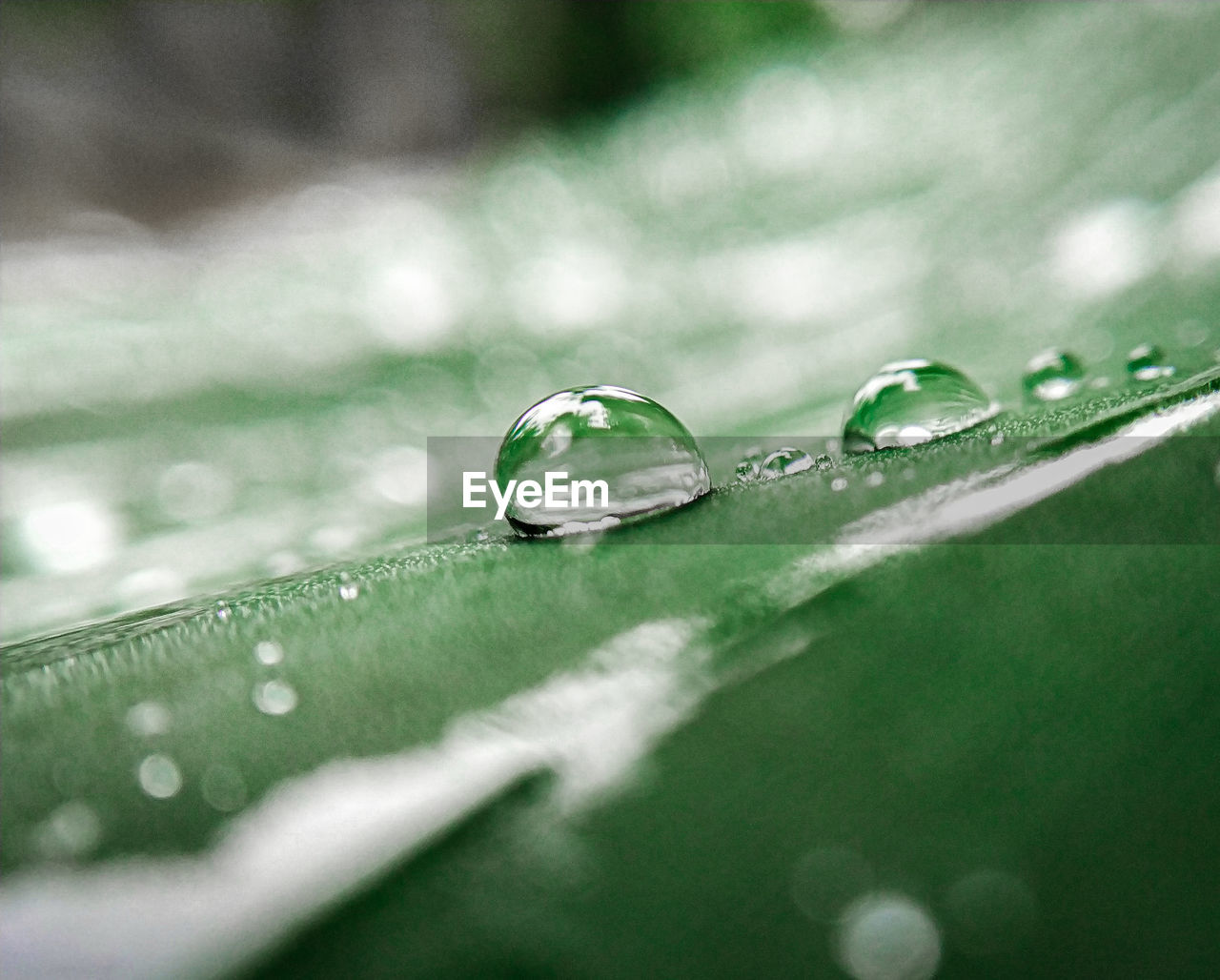drop, wet, water, selective focus, close-up, purity, freshness, no people, vulnerability, beauty in nature, fragility, nature, leaf, green color, plant part, dew, rain, plant, raindrop, outdoors, blade of grass, surface level, rainy season